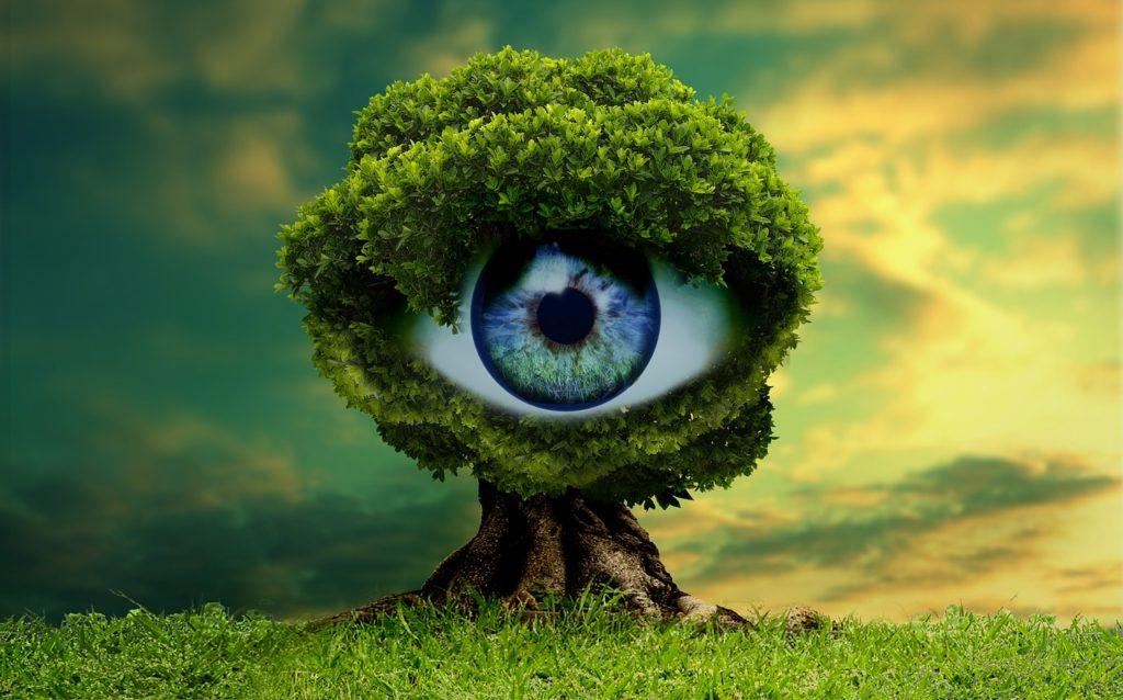 Figyelő fa kép